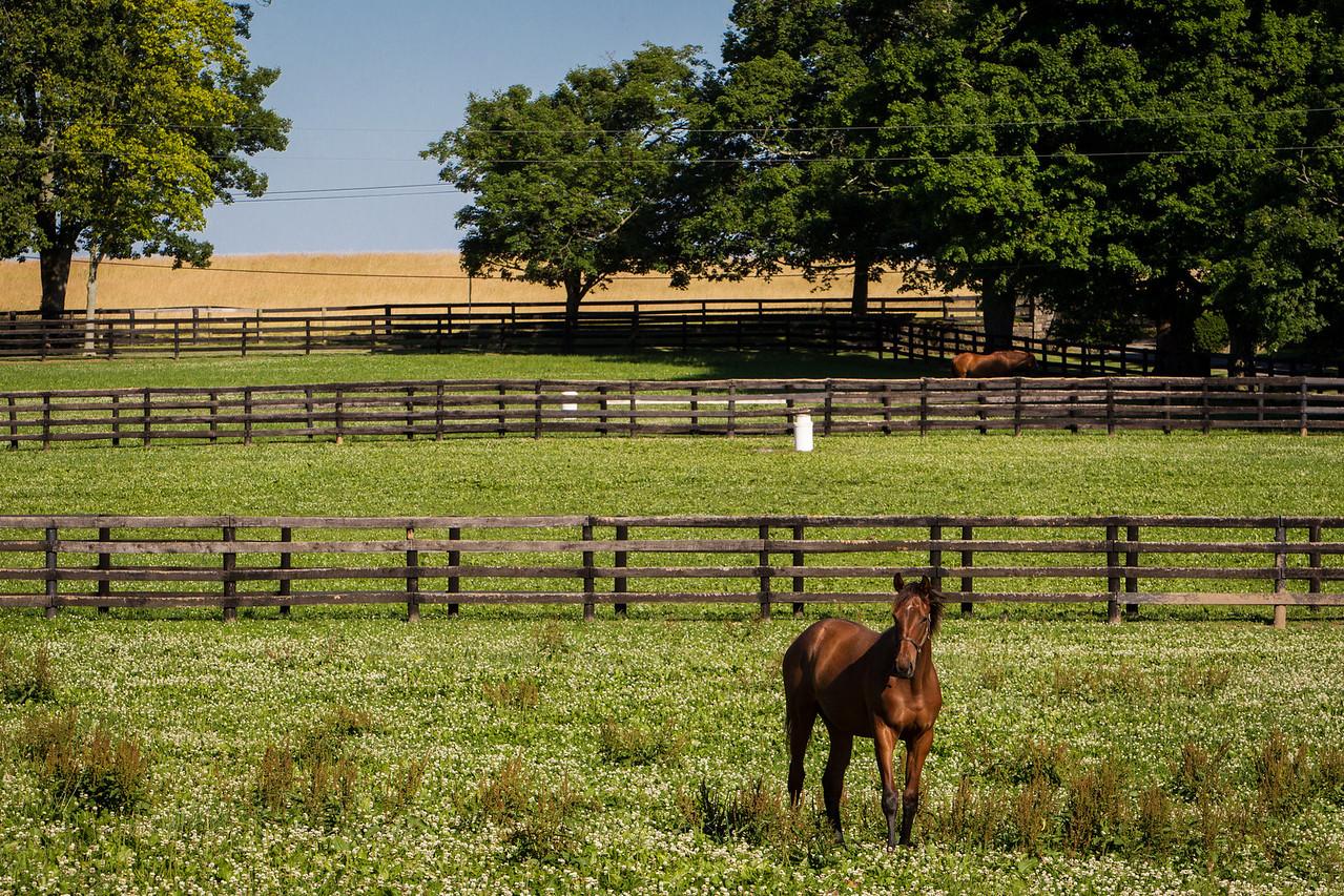 Nuckols Farm, Midway, Ky. 6.13.2012