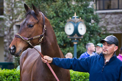 """Ball Four is paraded in the paddock at Keeneland in honor of his retirement to Old Friends.  Baseball plaer Jim Bouton, author of the book """"Ball Four"""" was there to sign books."""