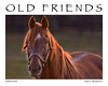 Creator : 'The Boys' at Old Friends, Georgetown, Ky. A home for retired thoroughbreds.