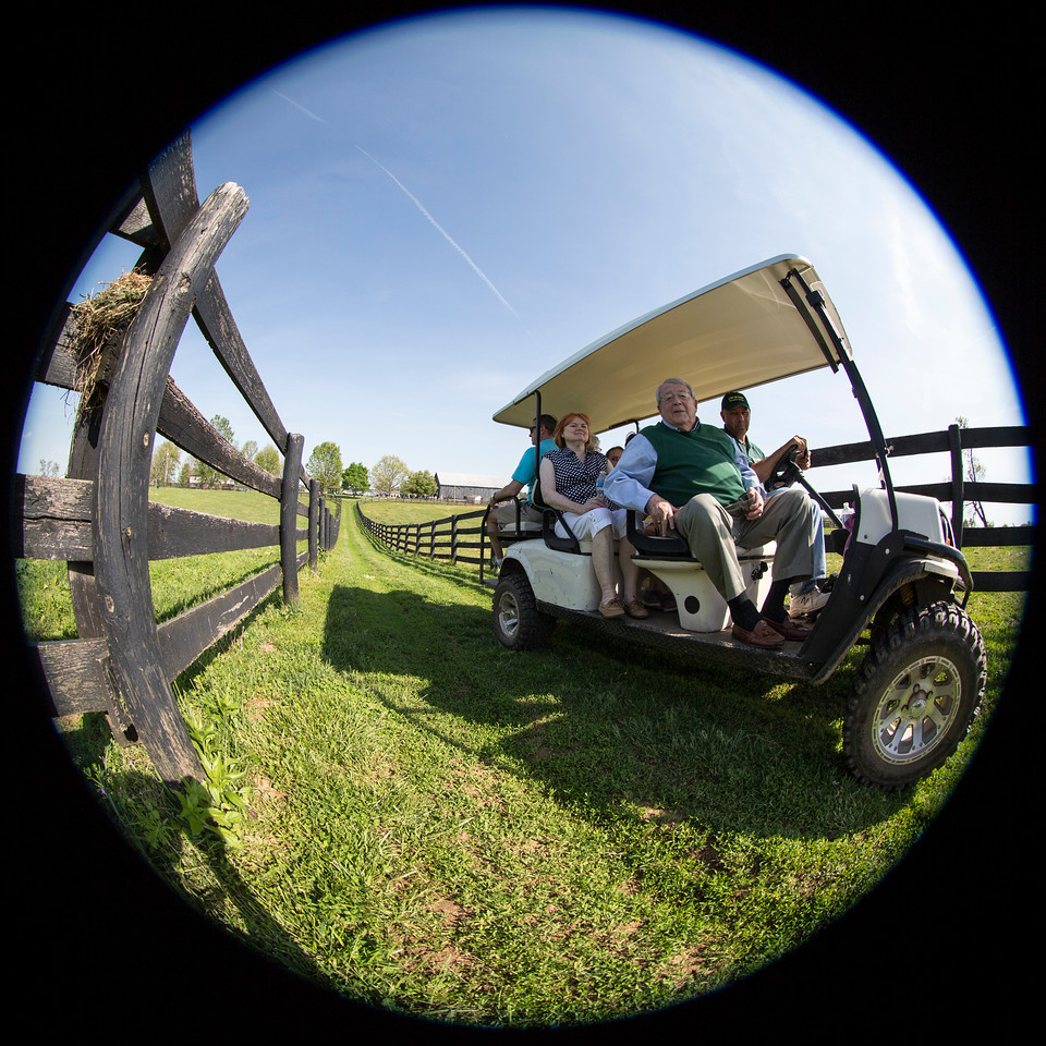 Many of the guests at Old Friends ride out on a golf cart to see the many thoroughbred retirees in their paddocks.