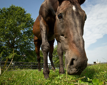 Prized enjoying a beautiful August morning at Old Friend's Equine Retirement.