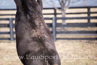 Sarava - the 2002 Belmont Stakes winner.  He can be visited at Old Friends where he enjoys waving to his admirerers.
