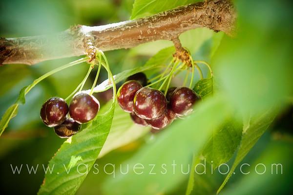 cherryhill047