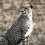 Safari-1005