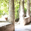 pompei156