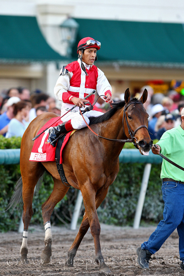 American County, with Edgar Prado up, wins the Sunshine Million Oaks at Gulfstream Park. 1.26.2008 (No Photo Credit for Racing Pictures used in Ads Please)