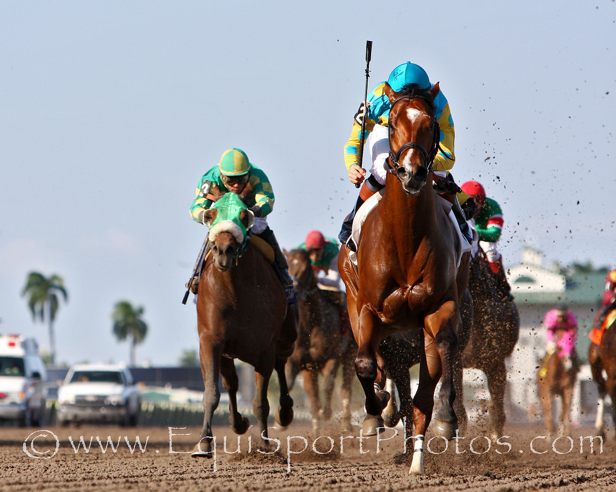 Eaton's Gift, with Kent Desormeaux up, wins the Swale Stakes at Gulfstream Park. 2.02.2008 (EquiSport Photos)