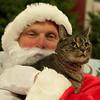 Agway Cat