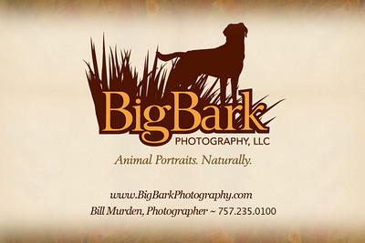 To return to our website, click on the Big Bark Photography link in upper left corner of gallery page. Or visit us at: http://www.bigbarkphotography.com.