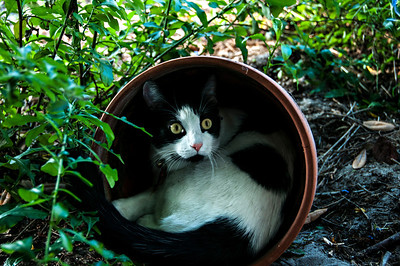 Oreo in the pot.  © Brian Glantz
