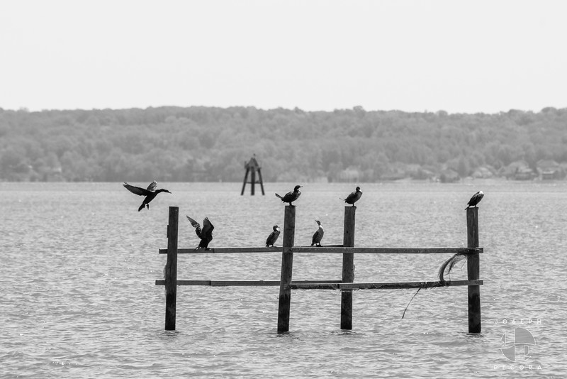 Birds May-10