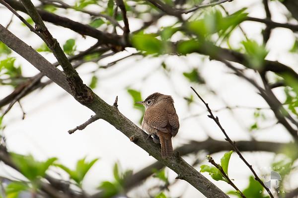 Birds May-3