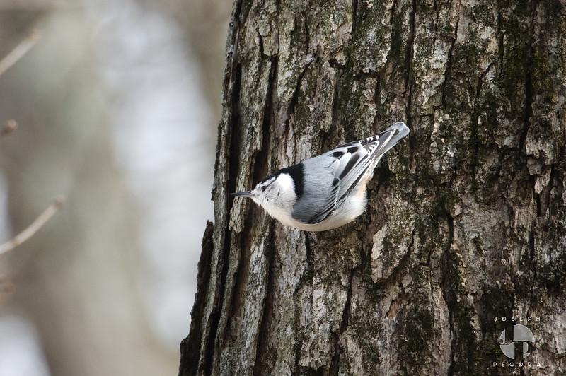 Birds Jan-1