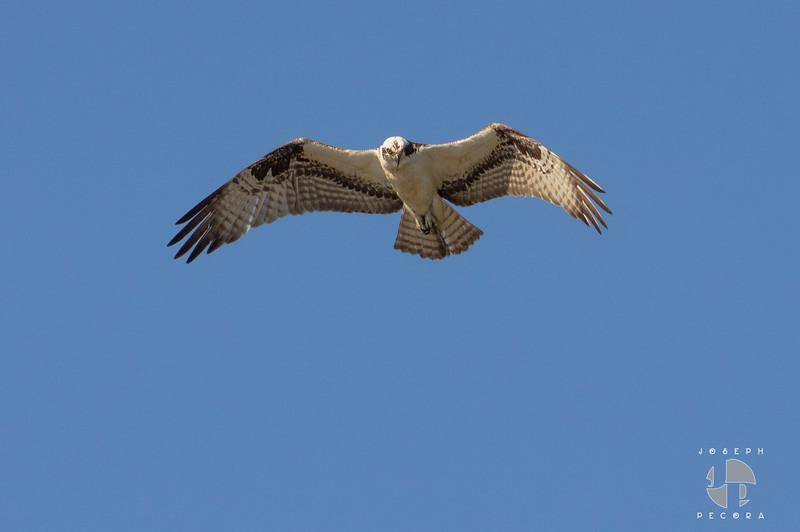 Birds May-8