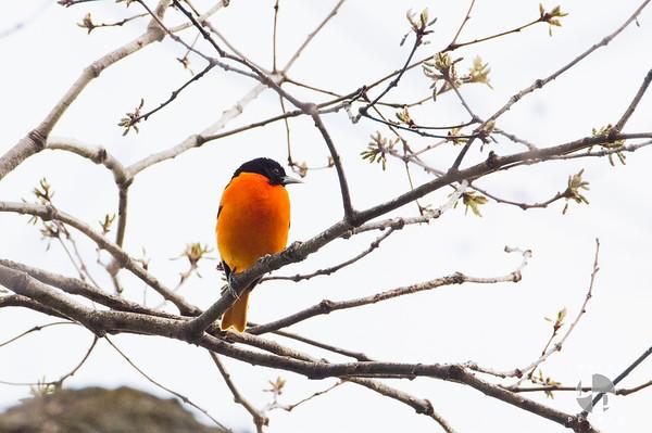 Birds May-2