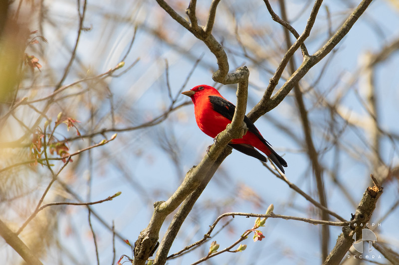 Birds May-1