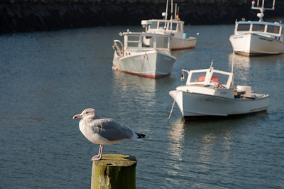 Gull & Boats - Perkins Cove, OGT Maine
