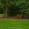2014-10-01_CntryPlc_Deer_001