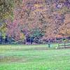 2020-11-06 Deer Grazing at Mr Glaspie's