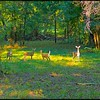 2013-10-17_Deer
