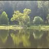 2014-09-30_Lake#2_Willow_01