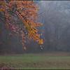 2010-12-16_CountryPlcFallFoliage_1960