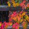 2012-11-03_PoisonIvy_01