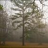 2013-01-06_FoggyMorn_1176