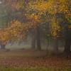 111308_CntryPlc_FoggyMorn_8148