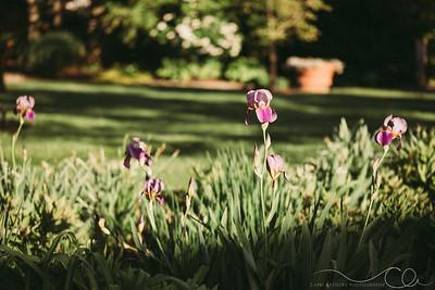Capri_Artistry_Photography-9