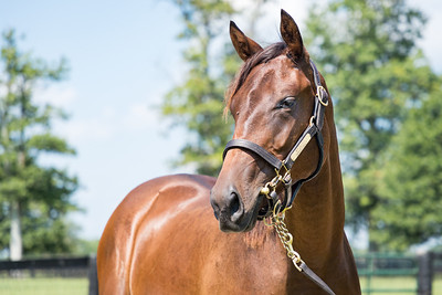 Nyquist - Doublebolt '19 at Runnymede Farm 8.24.20.