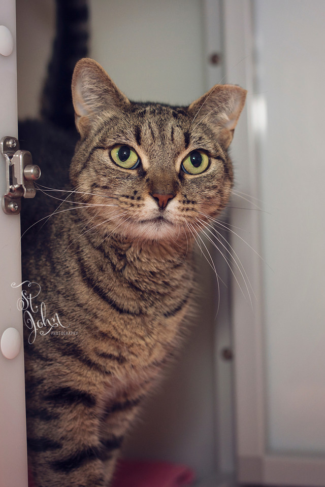 Gerda loves the camera & the camera loves her. She is a super model. Look at those beautiful eyes. She was working it.