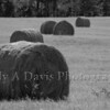 Hay bales in Georgia
