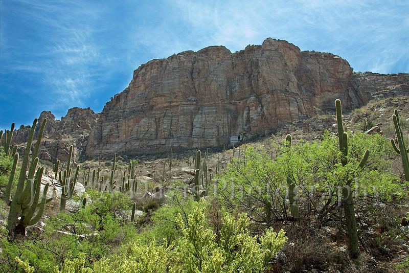 Cathedral Wall, Sabino Canyon, Tucson, Arizona