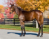 Shadwell.. Weanlings '08 :