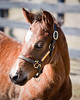 Shadwell.. Foals '09 (Paddock Shots) :