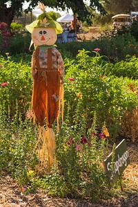 Soil Born Farms' 14th annual Autumn Equinox fundraiser, held Sept. 17, 2016 at the farm's American River Ranch. (Photo by Brian B. Fox)