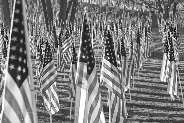 Some of the 2000+ flags from verans day in Naperville