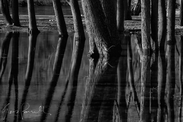trees-in-water_26281089675_o