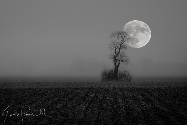 moon_and_tree_v002_AFFexport