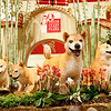 Year of the Dog Lunar New Year celebration at South Coast Plaza