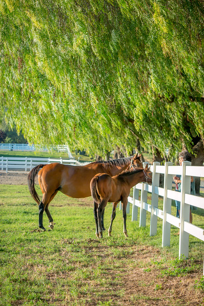 Special_T_Thoroughbreds11