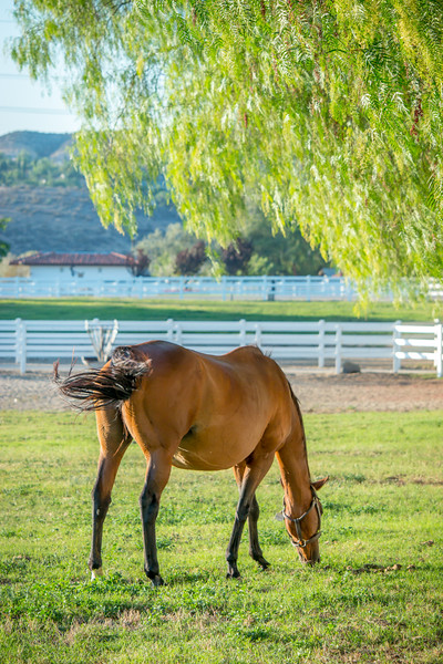 Special_T_Thoroughbreds6