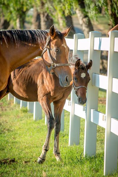 Special_T_Thoroughbreds14