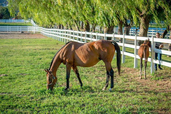 Special_T_Thoroughbreds2