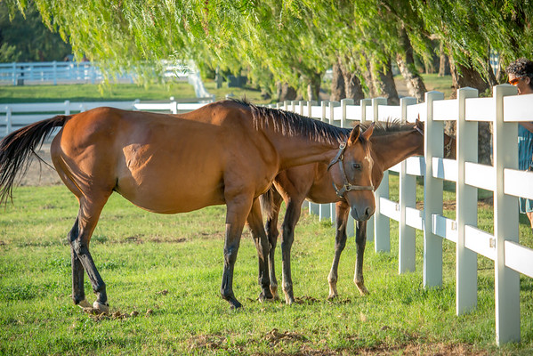 Special_T_Thoroughbreds19