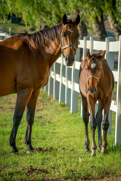 Special_T_Thoroughbreds16