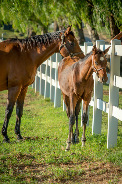 Special_T_Thoroughbreds17