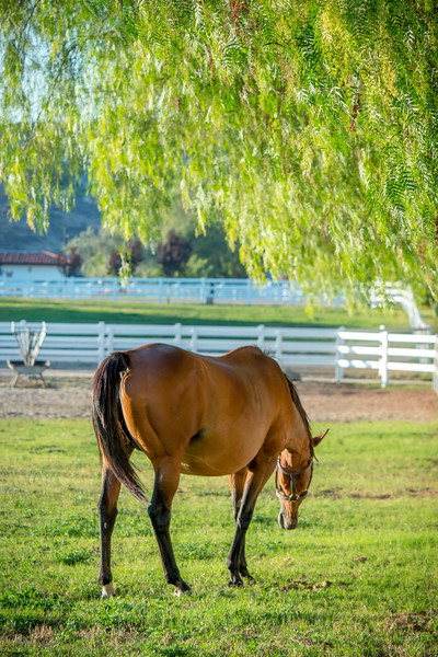 Special_T_Thoroughbreds10