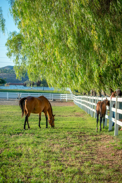 Special_T_Thoroughbreds8